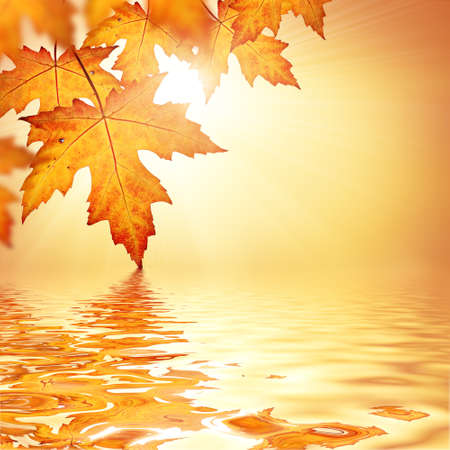 Orange fall leaves border background Stock Photo - 44829655