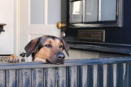 Dog is looking through the open door Stock Photo - 4706733