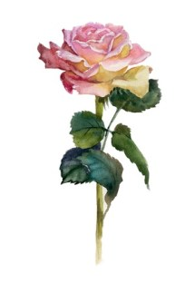 Pink rose Stock Photo - 15530485