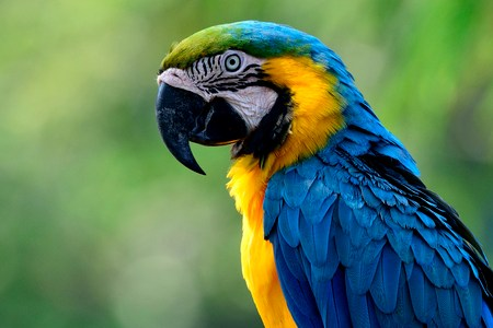 blue auto paint colors blue macaw blue background blue background