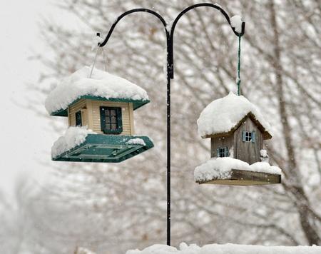 bird feeders in the winter park  Stock Photo - 8649009