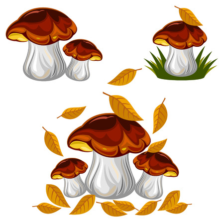 mushrooms Stock Vector - 47073372