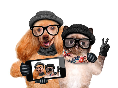 Dog with cat taking a selfie together with a smartphone. Stock Photo - 40636677