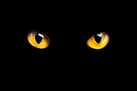 You can also upload and share your favorite halloween cat wallpapers. 50 155 Halloween Cat Stock Photos And Images 123rf