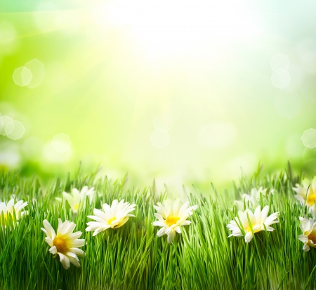Spring Meadow with Daisies  Grass and Flowers border  Stock Photo - 18892685