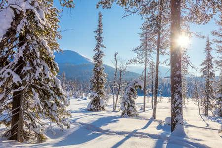 hiver incroyable ensoleille paysage fond d ecran avec le soleil et les arbres couverts de neige belle nature du nord