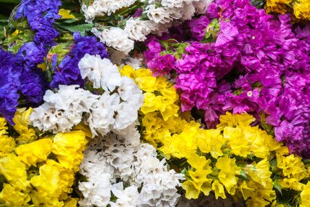 Closeup To Beautiful Colorful Statice Flowers Background Stock Photo     Closeup to Beautiful Colorful Statice Flowers Background Stock Photo    75873426