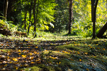 mountain path: Autumn mountain path Stock Photo