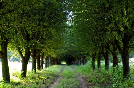 trees Stock Photo - 46346947