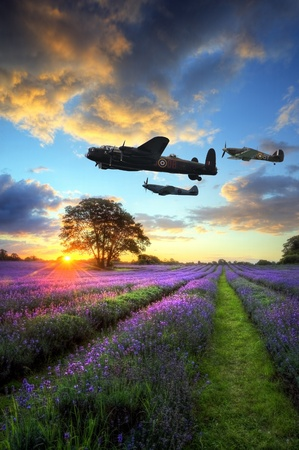 war: Beautiful image of stunning sunset with atmospheric clouds and sky over vibrant ripe lavender fields in English countryside landscape with World War 2 RAF airplanes flying overhead