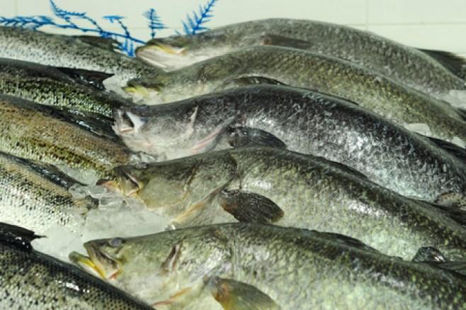 Grote gehele Barramundi-vissen bij vissenmarkt in Sydney, Nieuw Zuid-Wales, Australië Stockfoto - 86581074