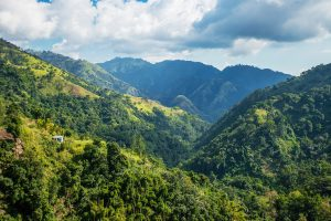 Blue,Mountains,Of,Jamaica,Where,Coffee,Is,Grown