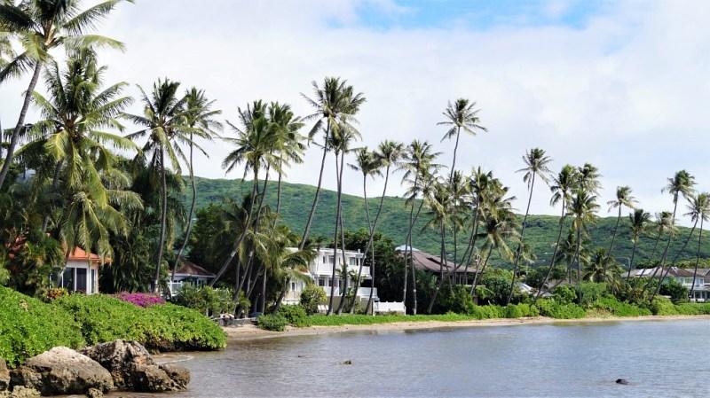 Palmen auf Hawaii