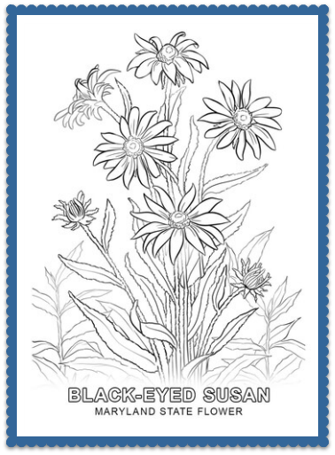 Maryland State Flower Black Eyed Susan By USA Facts For Kids