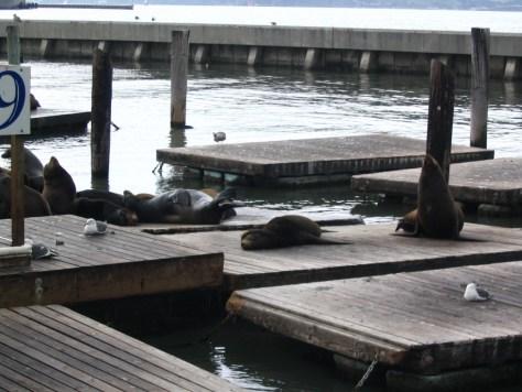 Fisherman's Wharf Pier 39 mit seinen Seelöwen
