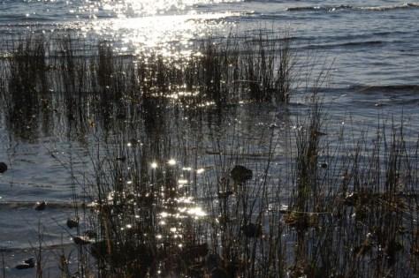 Lichtspiele am Ufer