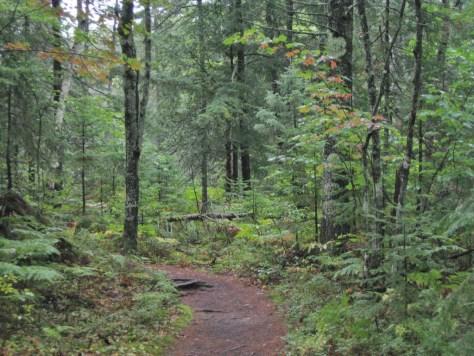 Märchenwald bei Munising