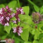 Биологические методы защиты сада и огорода от вредителей