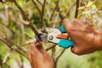 Календарь садовода и огородника: что нужно сделать в марте