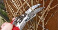 Готовим клематисы на зиму: укрытие и осенняя обрезка