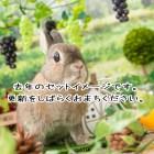 うさぎカフェ うさぎ撮影会 うさぎ専門店