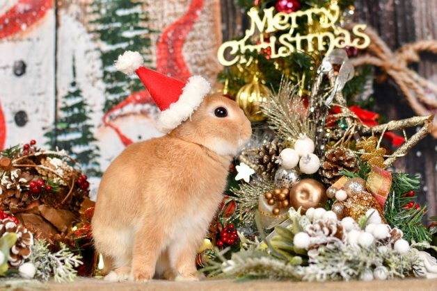 What are you doing for Christmas?  クリスマス/クリスマスイブともに通常運行です 今年はデコりません