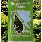 Strawberry Fields 3