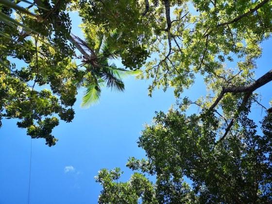 フィリピンの空、ココナッツ、ヤシの木