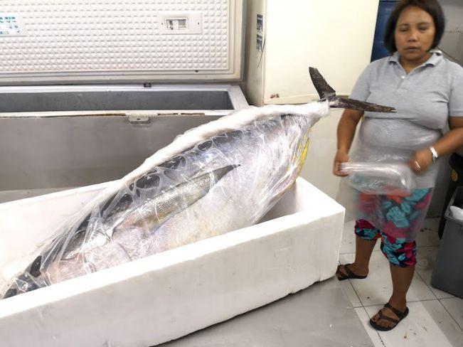 カルティマールマーケットの日本人魚屋のマグロ
