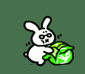 キャベツを食べるうさぴこ