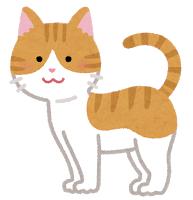 【動物】ネコのおなかがポッコリ膨らんでいる理由とは?