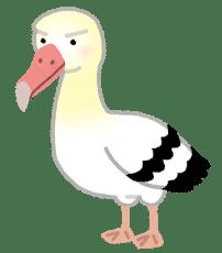 【鳥】70歳のアホウドリが産卵! 記録を更新 ひな元気