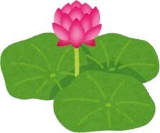 【神奈川】日本書紀にも書かれた「吉兆」現る ~「双頭蓮」が開花~