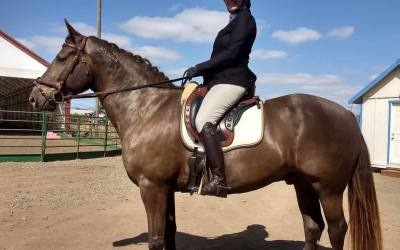 Fun Horsemanship 3