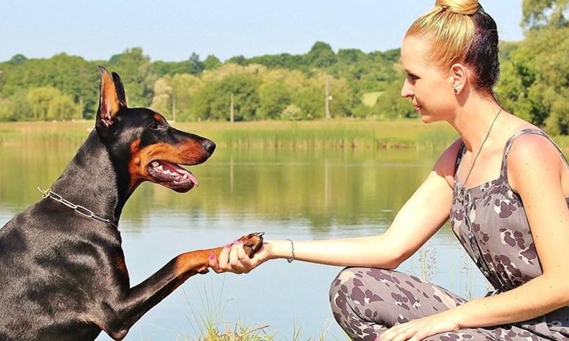 Dog Owners Live Longer Study