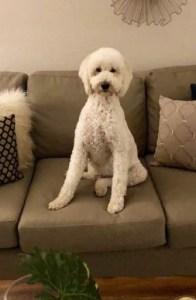 Duchess-pup