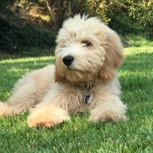 Duchess-pup7