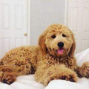Sadie-g-pup5