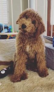 Violet-pup2