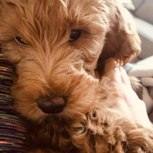 Roxy_pup2