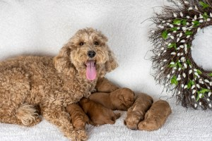 Pearl's Newborn Photos (Male on right side)