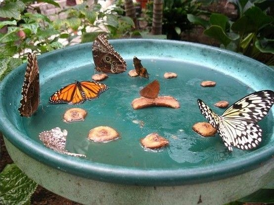 37 Insanely Cool Things To Do In Your Backyard This Summer usefuldiyprojects (12)