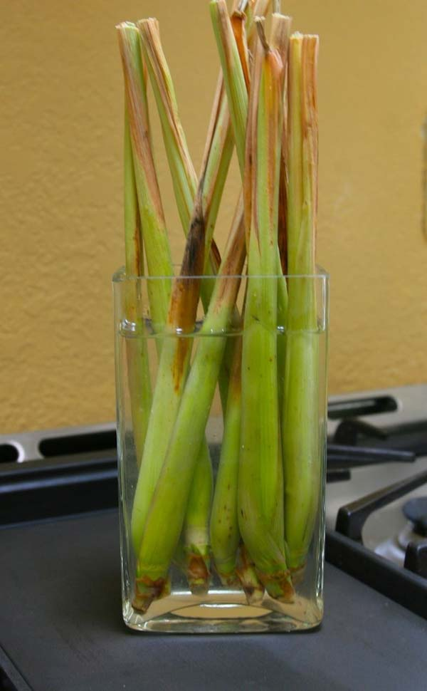 Keep Fresh Greenery At Grasp With Vegetables That Regrow From Scraps-usefuldiyprojects (13)