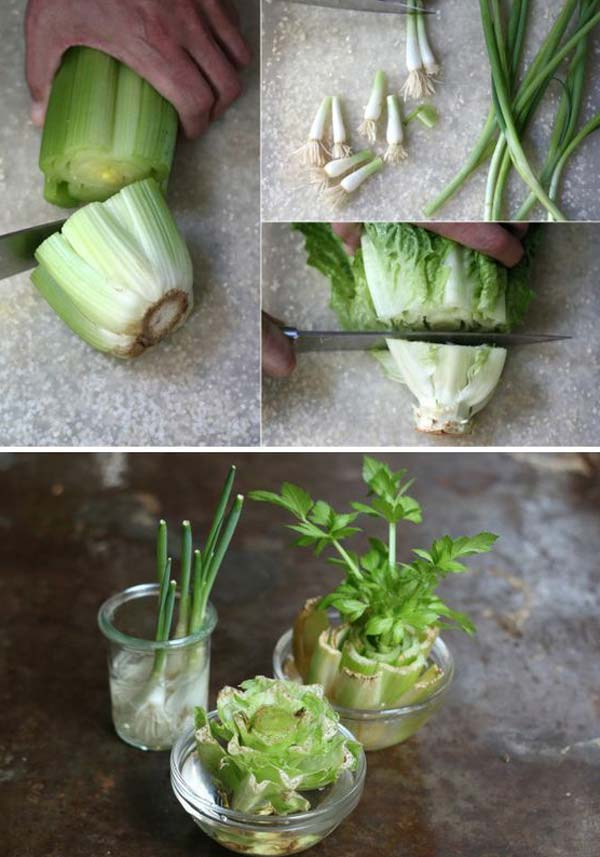 Keep Fresh Greenery At Grasp With Vegetables That Regrow From Scraps-usefuldiyprojects (4)