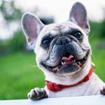 6 Dog Breeds That Rarely Ever Bark