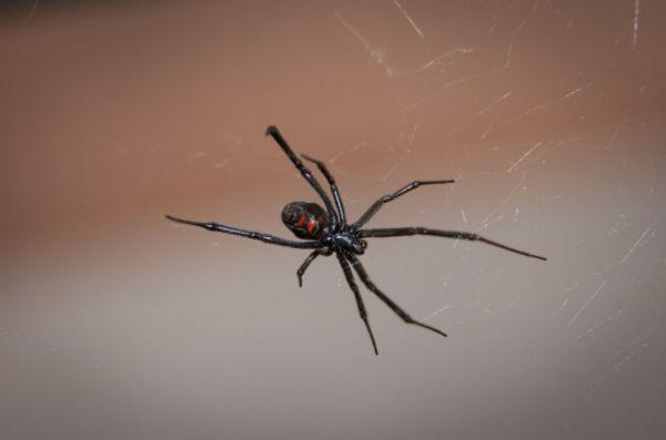 Житель Омска перепугал соседей ядовитыми пауками / VSE42 ...