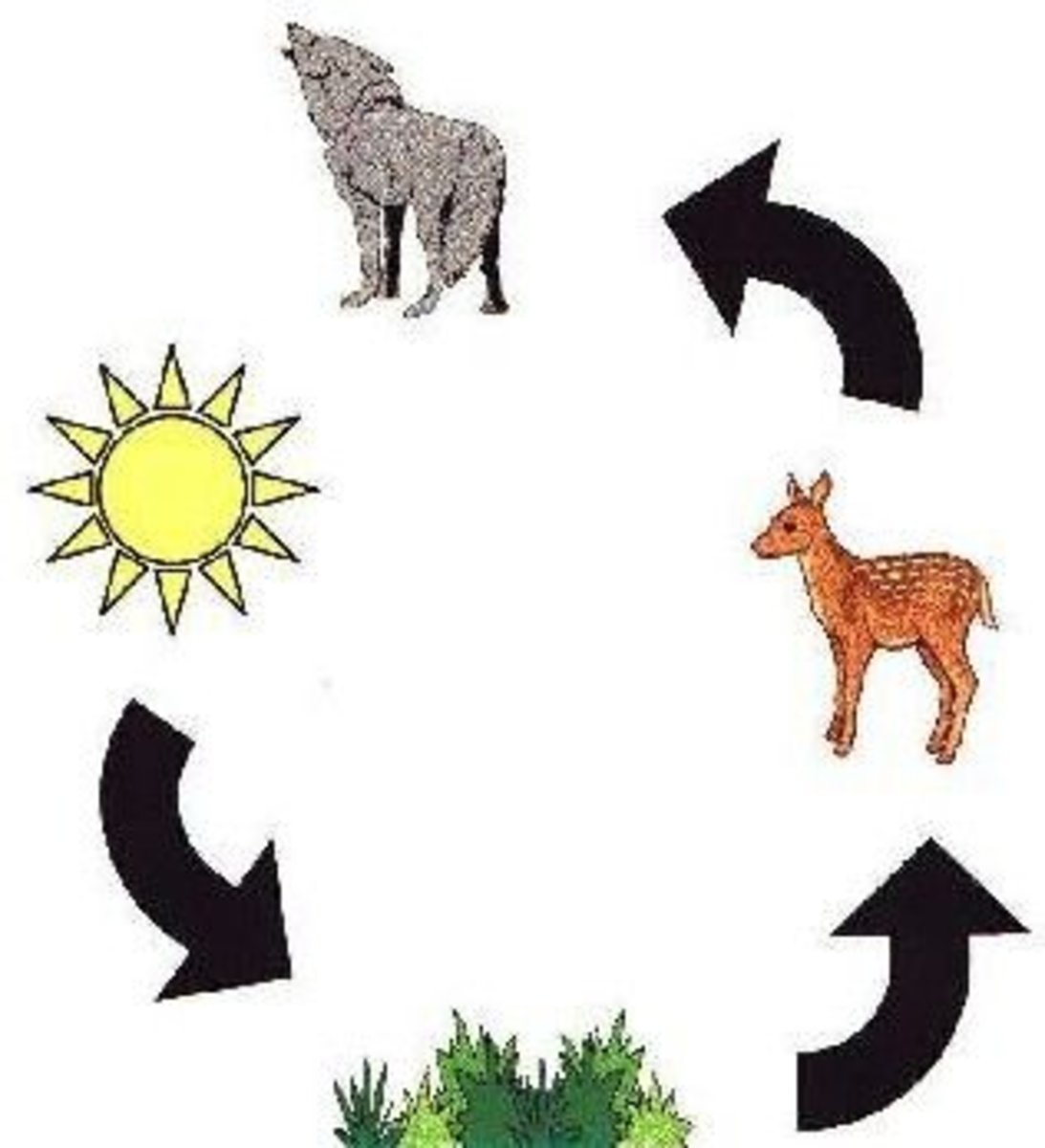 Esl Lessons Using Food Chains Webs And Pyramids In