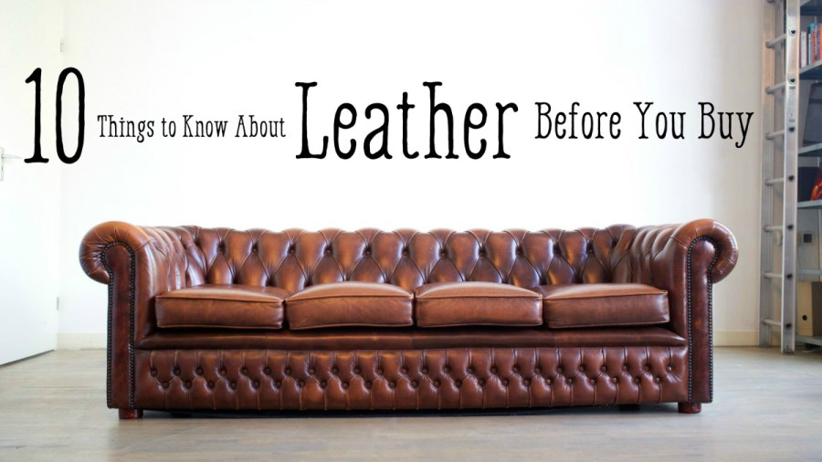 Leather Furniture Guide  Top Grain to Bonded Leather   Dengarden Before Your Buy  10 Things to Know About Leather