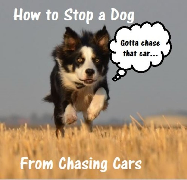 Stop Dog Chasing