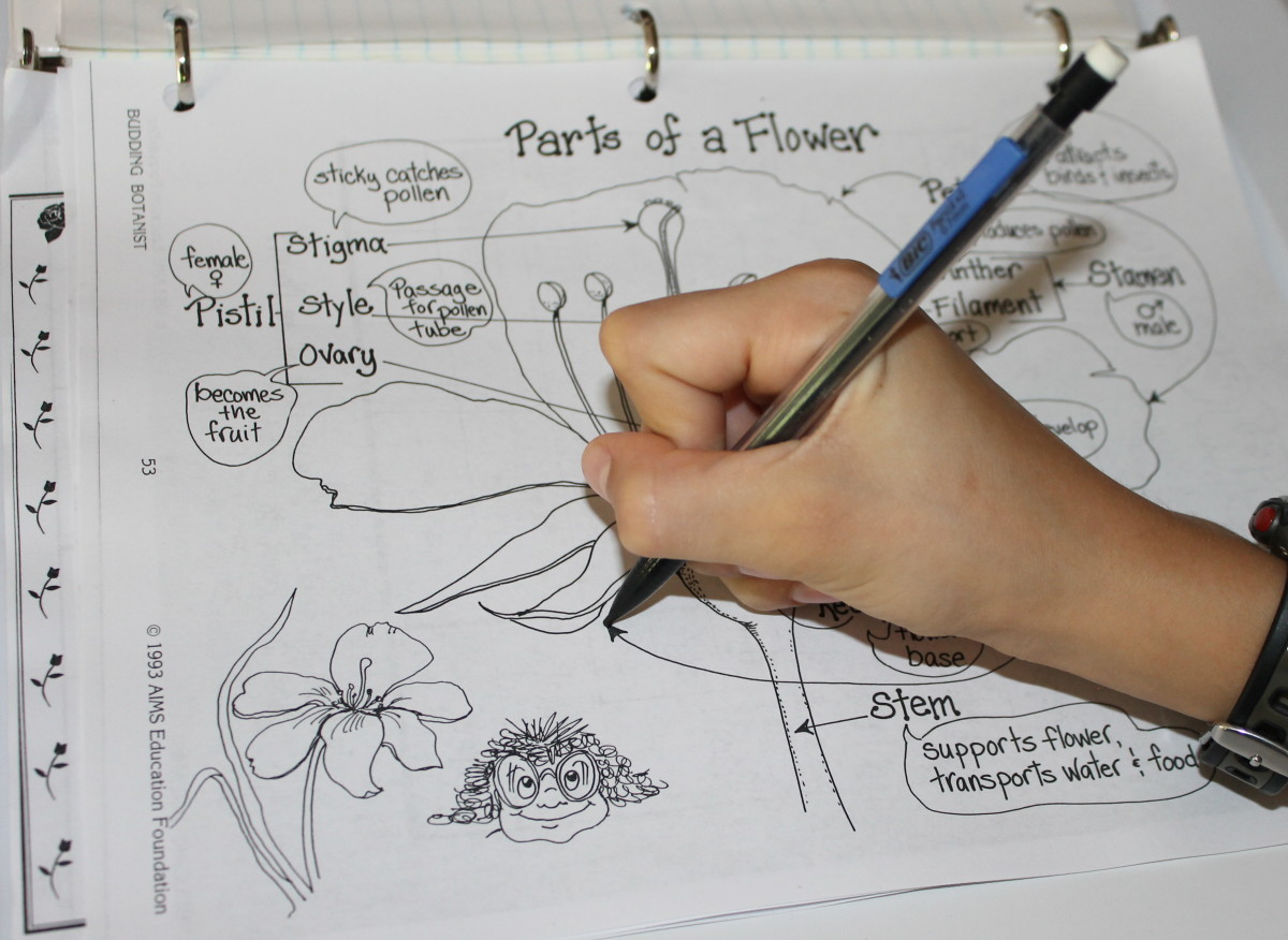 Parts Of A Flower Lesson